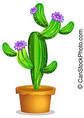 A cactus plant in a pot