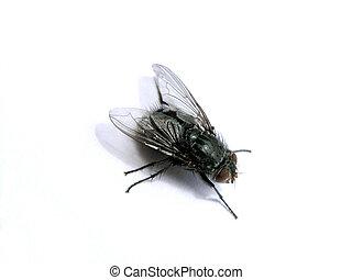 A macro fly