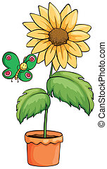 A pot with a sunflower