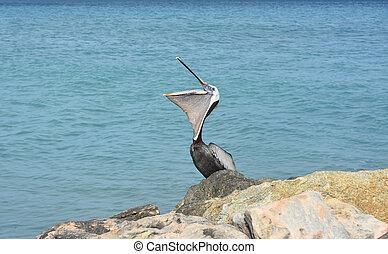 Adorable pelican with its beak open wide