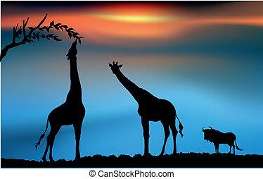 African savanna with giraffes and wildbeest at dawn