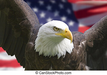American eagle with flag
