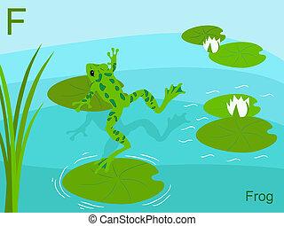 Animal alphabet, F for frog