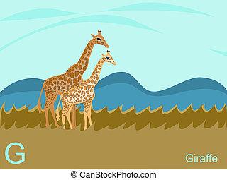 Animal alphabet, G for giraffe