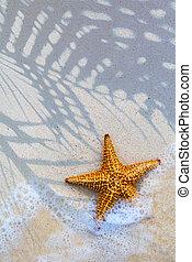 Art Sea star on the beach background