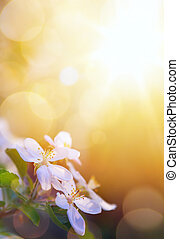 art spring flowers on the sky background