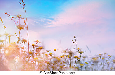 art summer floral nature background; sunset over meadow