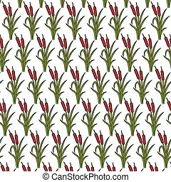 background pattern with reeds vector illustration (bulrushes and grass)