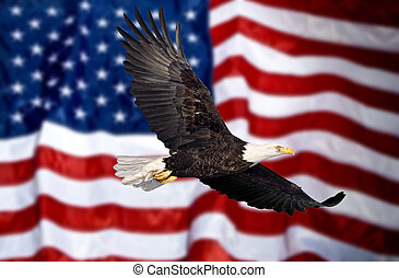 Bald eagle flying in front of flag