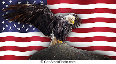 Bald Eagle with National American Flag in the Background.