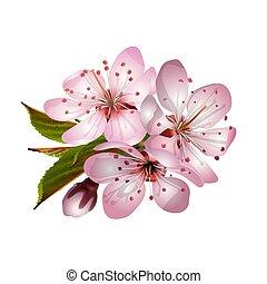 Spring pink sakura blossoms