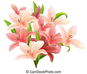 Big bunch of lilies isolated on white background