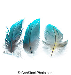 Colorful bird feathers, isolated on white background