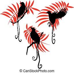 Bird of paradise silhouette vector illustration set