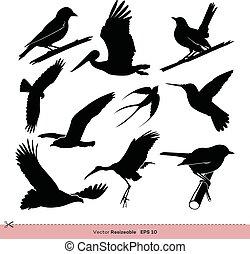 Bird Silhouette Set Vector Template Illustration Design