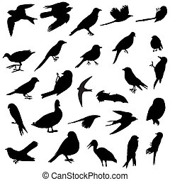 26 silhouettes of several birds races