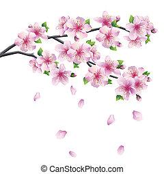 Blossoming branch of sakura - Japanese cherry tree
