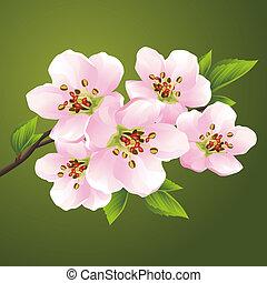 Blossoming sakura - japanese cherry tree