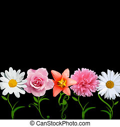 bright flowers in a row with creative stems isolated on black background