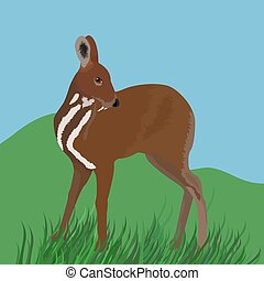 musk deer cartoon illustration on grenn grass