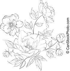 Bush of beautiful peonies, ink engraving. Vector illustration.