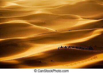 Camel caravan going through the sand dunes in the Sahara Desert, Erg Chebbi, Maroc.