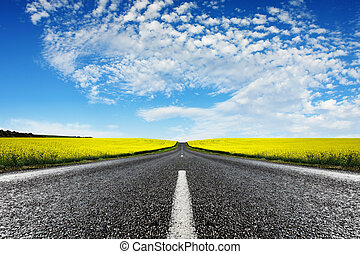 Road travelling through a Canola Field