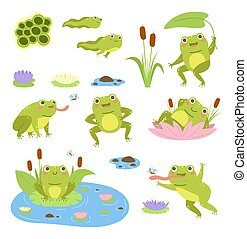 Cartoon frogs. Cute water reptiles, funny amphibians in different poses, tadpoles and toad, lilies and butterflies. Wild fauna, happy frogling in reeds, vector flat style mascot isolated set