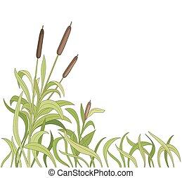 cartoon reeds background. vector