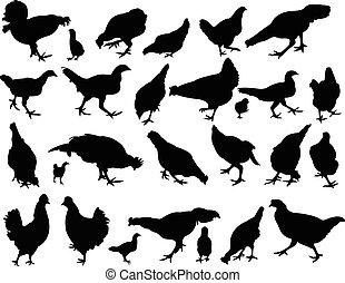 chicken silhouette vector set