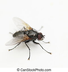 close up shot from a house fly