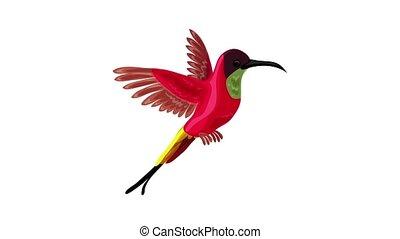 Colibri bird icon animation
