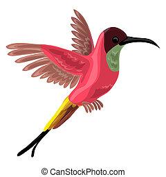 Colibri bird icon, cartoon style
