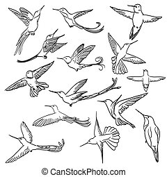 colibri drawing set made in line art style