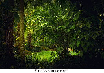 color view of nice color misty tropical jungle