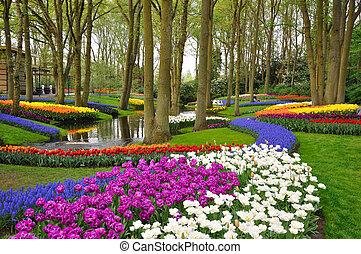 Colorful blooming tulips in Keukenhof park in Holland