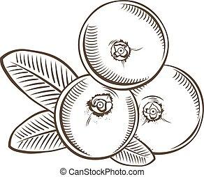 Cranberry in vintage style. Line art vector illustration