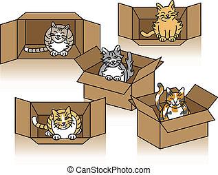 Cute Cats In Cartons