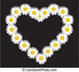 Daisy flower heart