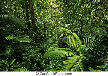 A picture looking into a dense, lush, remote tropical rain forest jungle in Costa Rica