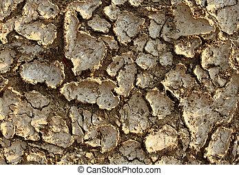 Drought Environment
