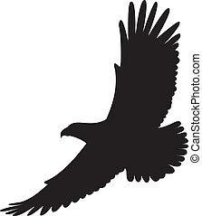 Eagle Vector Illustration on white