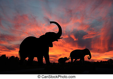 Elephant family is sillhouetted against a firery sky as they make their way across the Serengetti plains.