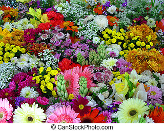 Colorful flowers in Flowers Exhibition