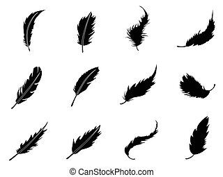 isolated feather Silhouettes from white background