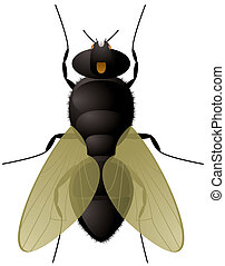 Illustration of everyones favorite insect the fly with transparent wings