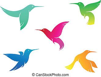 Flying color hummingbirds