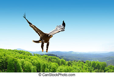 Flying eagle.
