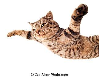 Flying funny kitten