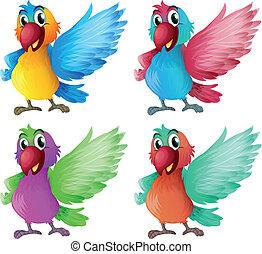 Four adorable parrots